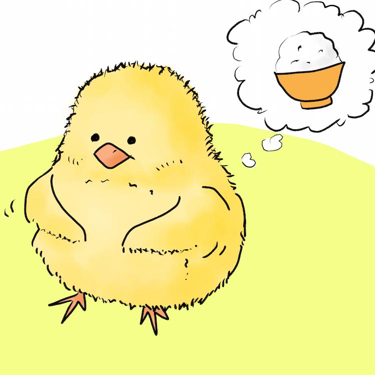 卵黄をお腹に溜めるひよこ