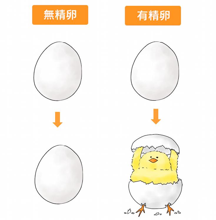 有精卵と無精卵