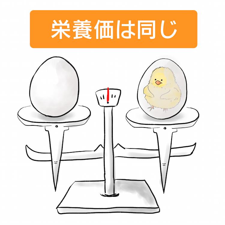 有精卵と無精卵の栄養価は同じ