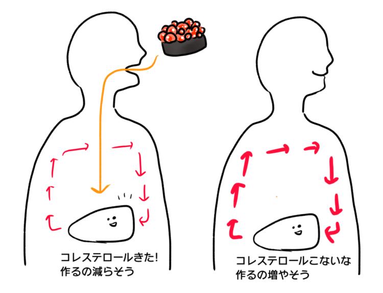 コレステロール量の調節