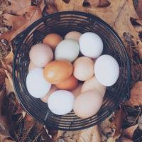 卵の色のちがい