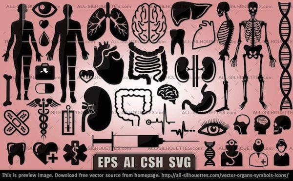 vector-organs-symbols-icons-min