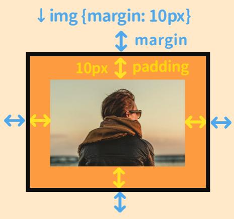 marginはこの部分