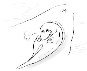 カクレウオはナマコの腸内の残存物を食べる