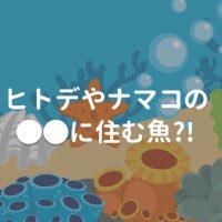 生き物の雑学 ヒトデやナマコの体内に住む魚
