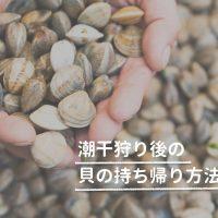 潮干狩り後の貝の持ち帰り方法
