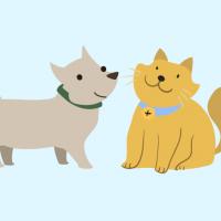 毎日更新!Amazonのペット用品のセール情報まとめ(犬・猫用)