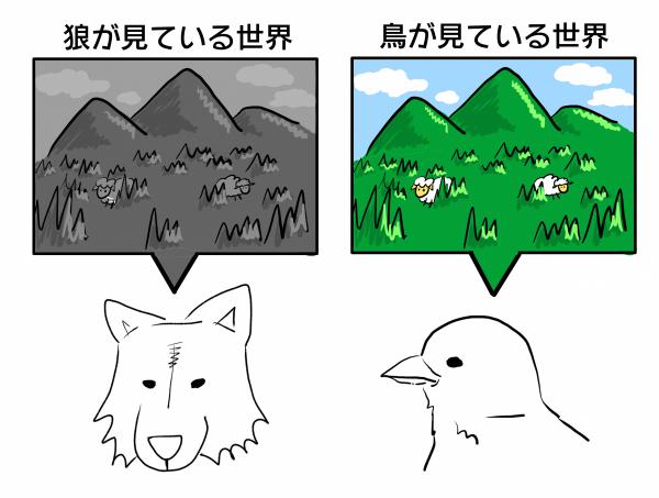 狼の色覚と鳥の色覚
