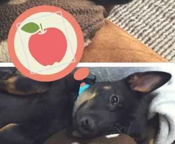 果物のイラストを貼付け