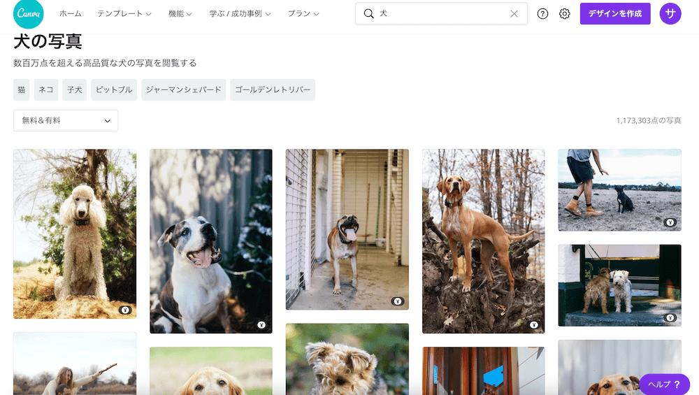 「犬」の検索結果の写真素材
